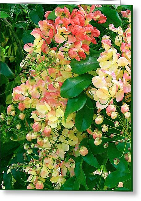 James Temple Greeting Cards - Rainbow Shower Tree Greeting Card by James Temple