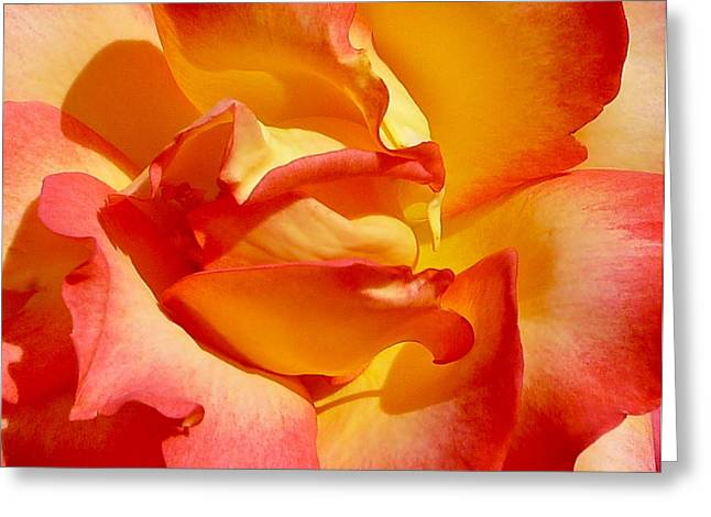 Rose Petal Sorbet Greeting Cards - Rainbow Sorbet Rose Close Up Greeting Card by Denise Mazzocco