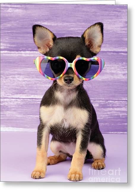 Cute Digital Art Greeting Cards - Rainbow Sunglasses Greeting Card by Greg Cuddiford