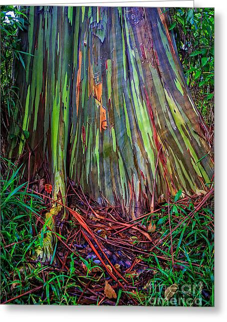 Tree Bark Greeting Cards - Rainbow Trees of Maui Hawaii Greeting Card by Edward Fielding