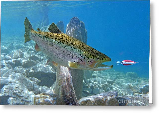 Rainbow Trout Greeting Cards - Rainbow Trout and Dardevle lure Greeting Card by Paul Buggia
