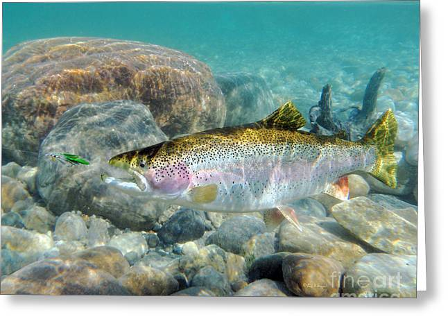 Rainbow Trout Greeting Cards - Rainbow Trout and Green Ghost Greeting Card by Paul Buggia