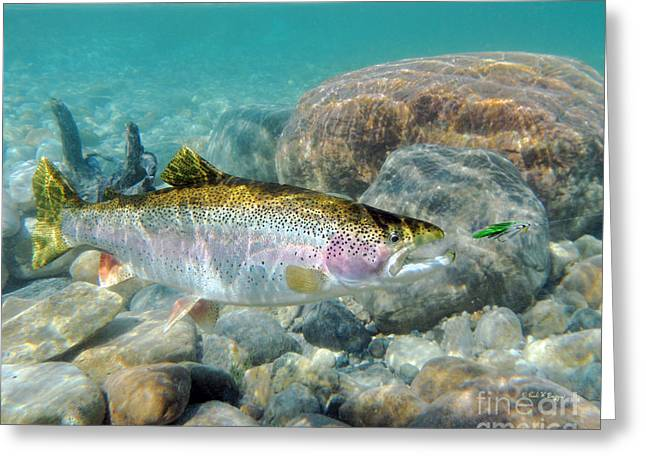 Rainbow Trout Greeting Cards - Rainbow Trout and Green Ghost wet fly Greeting Card by Paul Buggia