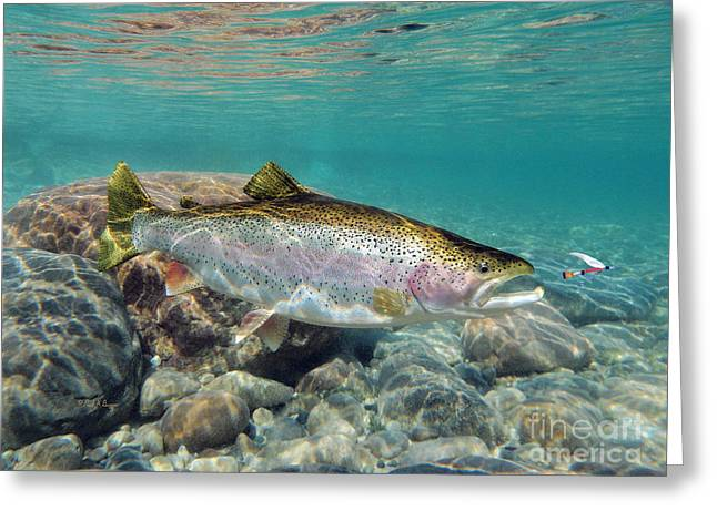 Rainbow Trout Digital Art Greeting Cards - Rainbow Trout and Royal Coachman Greeting Card by Paul Buggia