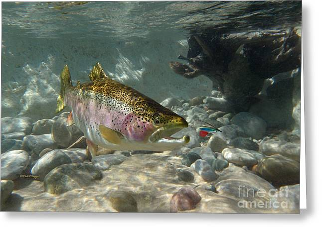 Rainbow Trout Greeting Cards - RAINBOW TROUT and SUPERVISOR FLY Greeting Card by Paul Buggia