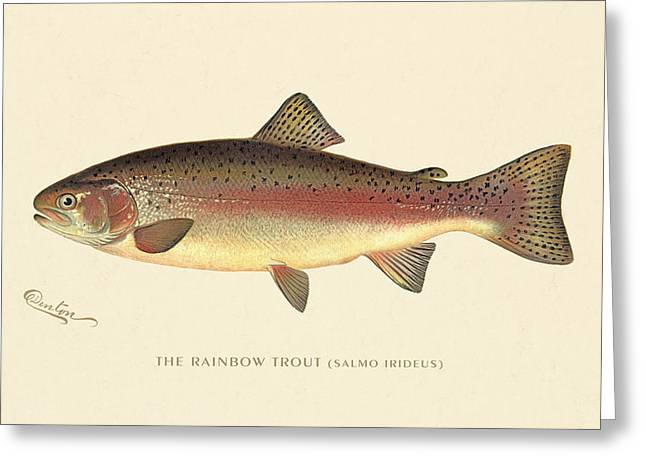Decorative Fish Greeting Cards - Rainbow Trout Greeting Card by Gary Grayson