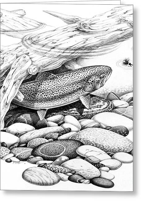 Rainbow Trout Greeting Cards - Rainbow Trout Pencil Study Greeting Card by Jon Q Wright