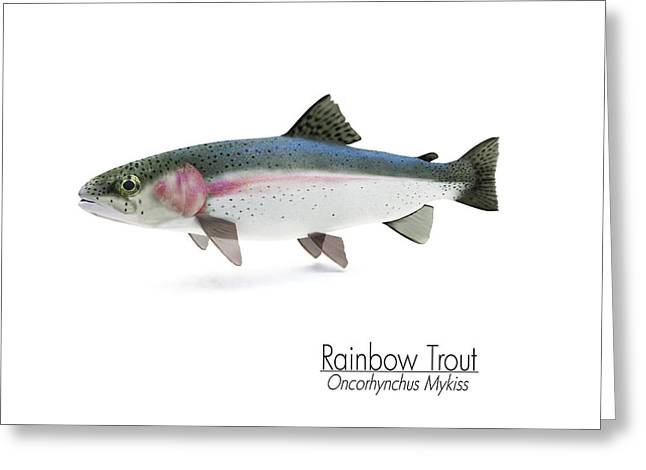 Rainbow Trout Digital Art Greeting Cards - Rainbow Trout Portrait Greeting Card by Leone M Jennarelli