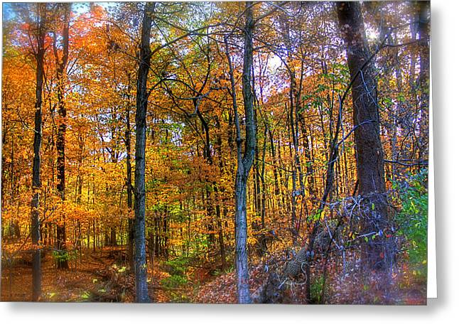 Indiana Autumn Greeting Cards - Rainbow Woods Greeting Card by Andrea Platt