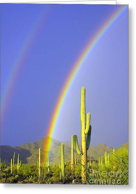 Double Rainbow Greeting Cards - Rainbows And Saguaros - Left Greeting Card by Douglas Taylor