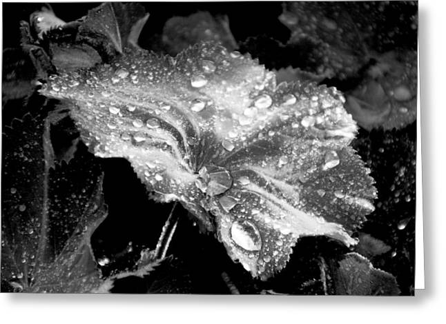 Raindrops On Leaves Greeting Cards - Raindrop covered leaf Greeting Card by Tracy Winter