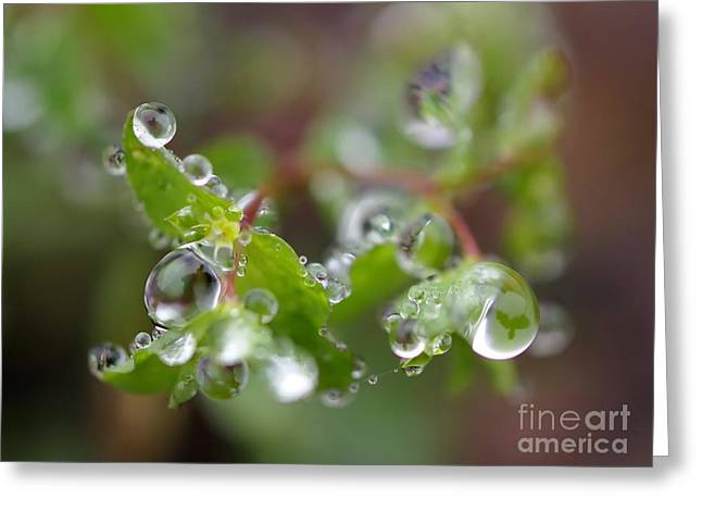 My Ocean Greeting Cards - Raindrops 2 Greeting Card by   FLJohnson Photography