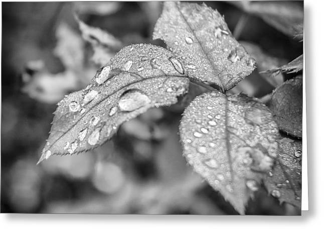 Raindrops On Leaves Greeting Cards - Raindrops Greeting Card by Carolyn Marshall