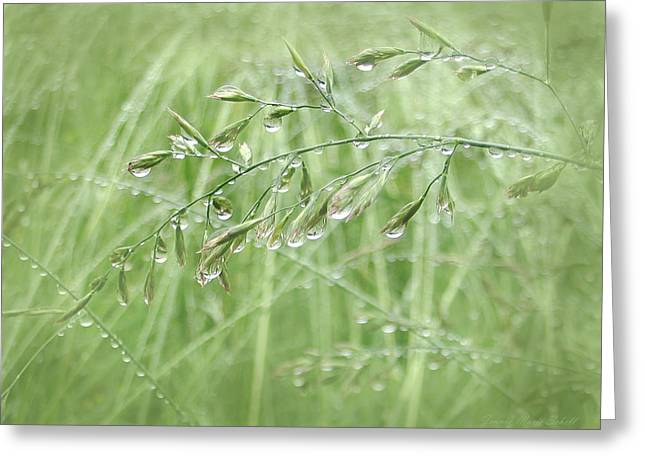 Rain Drop Greeting Cards - Raindrops Falling on Green Grasses Greeting Card by Jennie Marie Schell