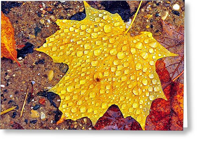 Fall Colors Greeting Cards - Raindrops on Autumn Leaf Greeting Card by Terri Gostola