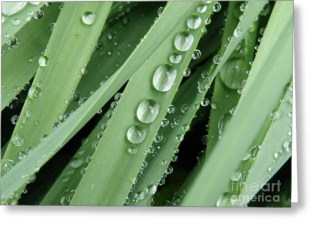 Beads Greeting Cards - Raindrops on Blades of Grass Greeting Card by Amy Cicconi