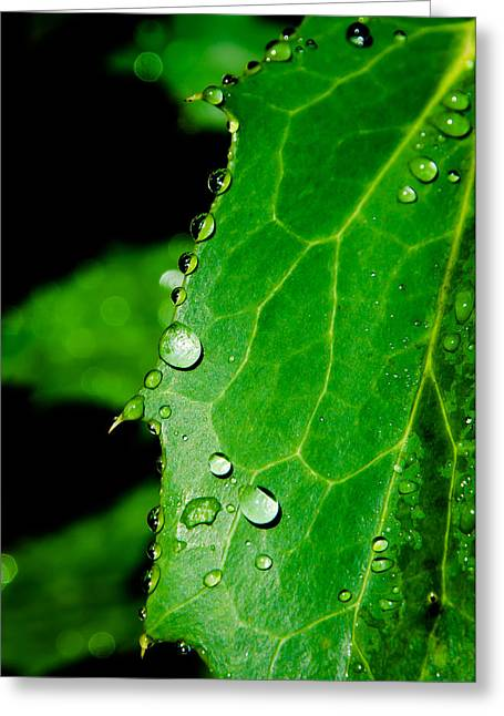 Raindrops On Green Leaf Greeting Card by Andreas Berthold