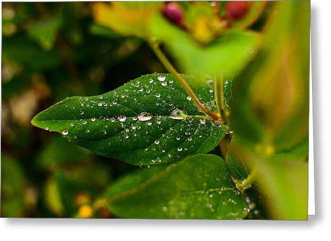 Raindrops On Green Leaves I Greeting Card by Marco Oliveira