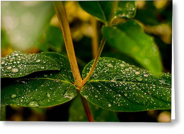 Dewdrops Greeting Cards - Raindrops On Green Leaves II Greeting Card by Marco Oliveira