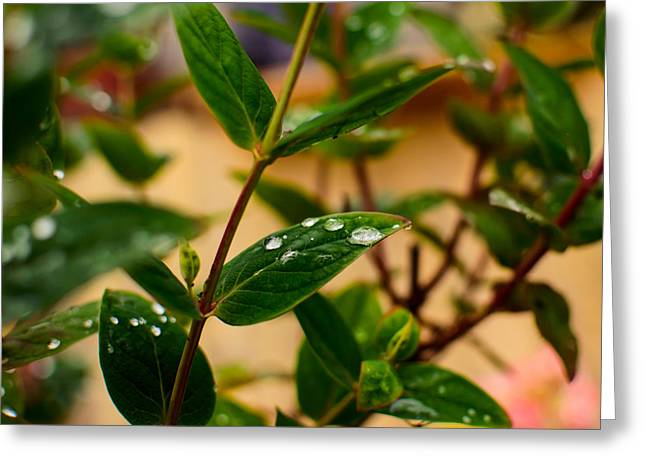 Dewdrops Greeting Cards - Raindrops On Green Leaves III Greeting Card by Marco Oliveira
