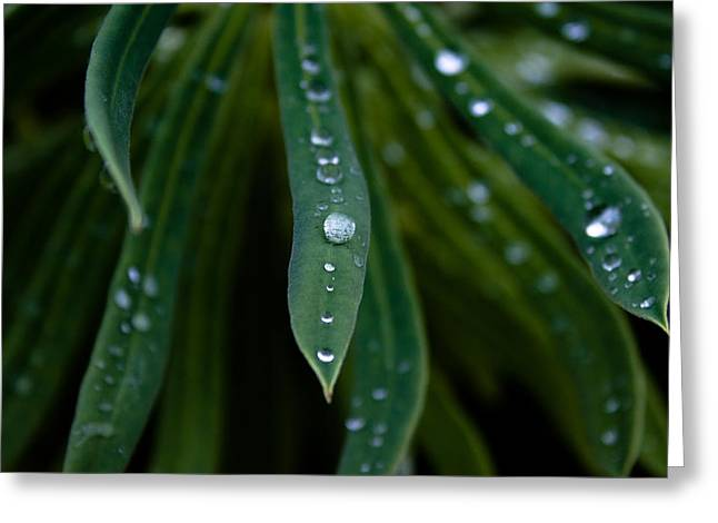 Victoria Johns Greeting Cards - Raindrops on Green Leaves Greeting Card by John Daly