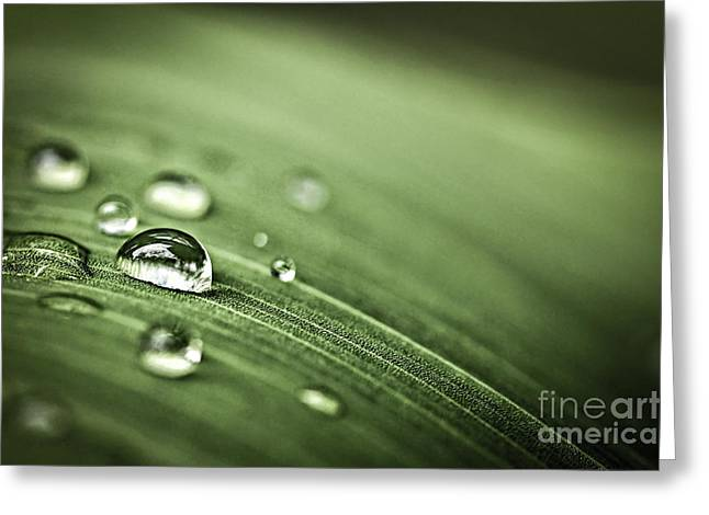 Dew Greeting Cards - Raindrops on leaf Greeting Card by Elena Elisseeva