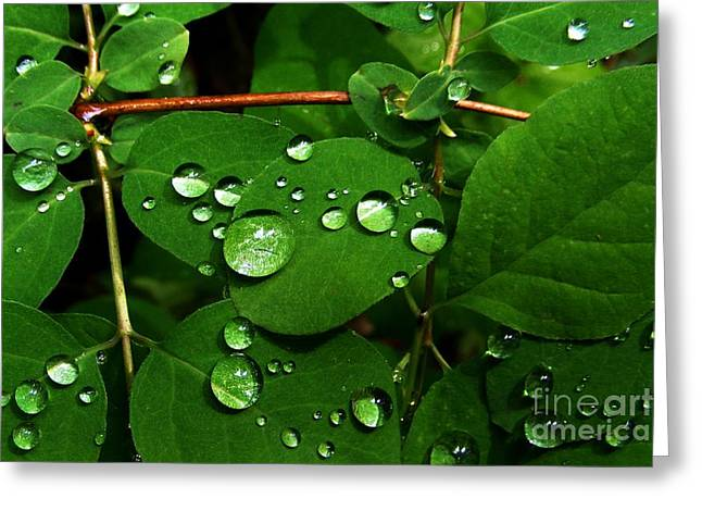 Raindrops On Leaves Greeting Cards - Raindrops on Leaves Greeting Card by Steve Patton