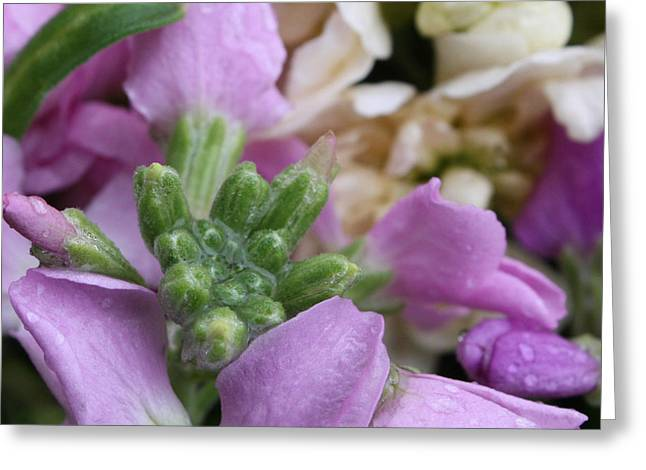 Raindrops On Flowers Greeting Cards - Raindrops on Purple and White Flowers Greeting Card by Carol Groenen