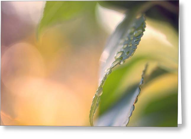 Raindrops Three Greeting Card by Bob Orsillo