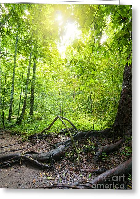 Deep Forest Greeting Cards - Rainforest Greeting Card by Atiketta Sangasaeng