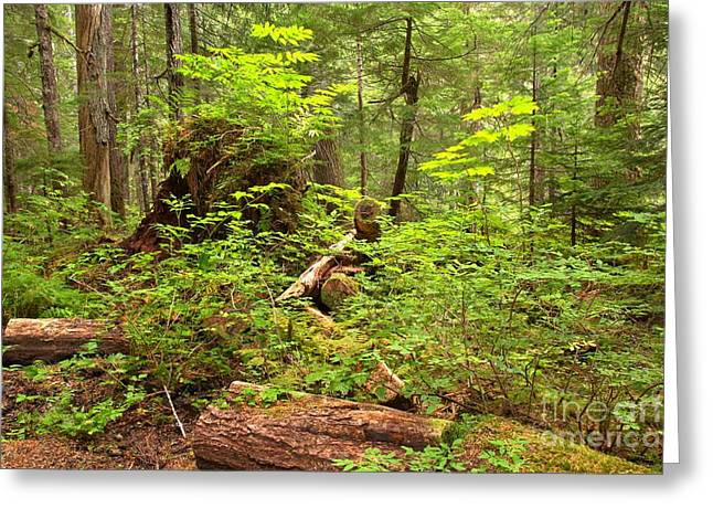 Lichen Covered Trees Greeting Cards - Rainforest Green Everywhere Greeting Card by Adam Jewell
