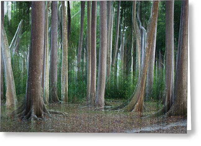 Abstract Rain Greeting Cards - Rainforest Impression Havelock Island Greeting Card by Konrad Wothe