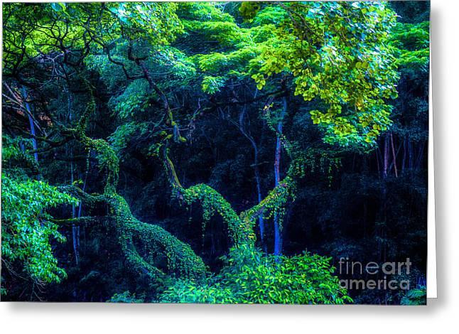 Waimea Falls Greeting Cards - Rainforest in Waimea Valley Greeting Card by Lisa Cortez