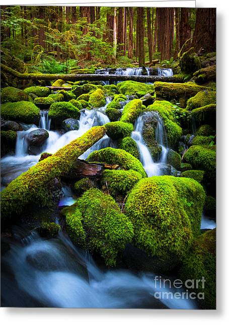 Harmonious Photographs Greeting Cards - Rainforest Magic Greeting Card by Inge Johnsson