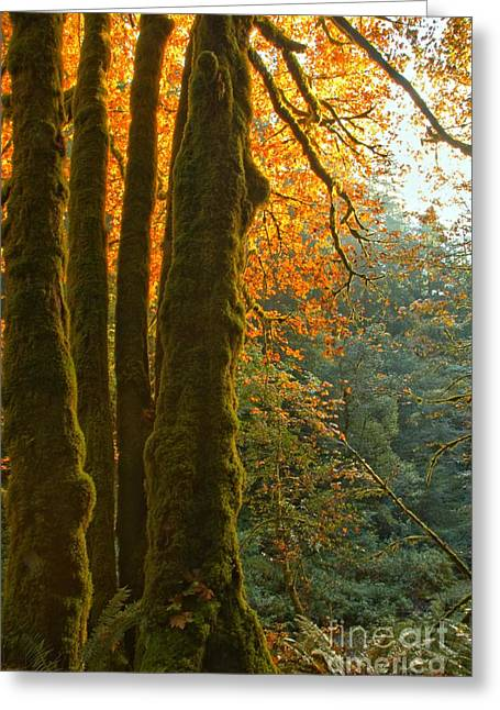 State Parks In Oregon Greeting Cards - Rainforest Orange Greeting Card by Adam Jewell