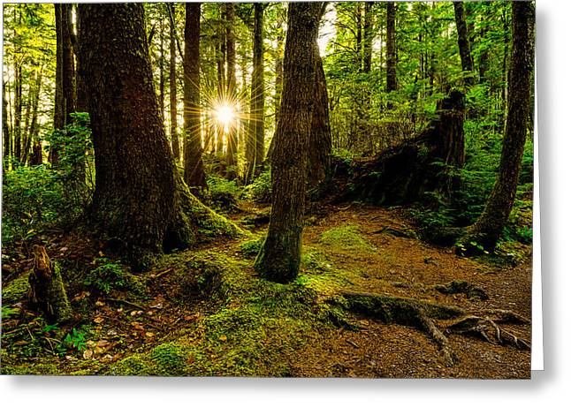 Light Rays Greeting Cards - Rainforest Path Greeting Card by Chad Dutson