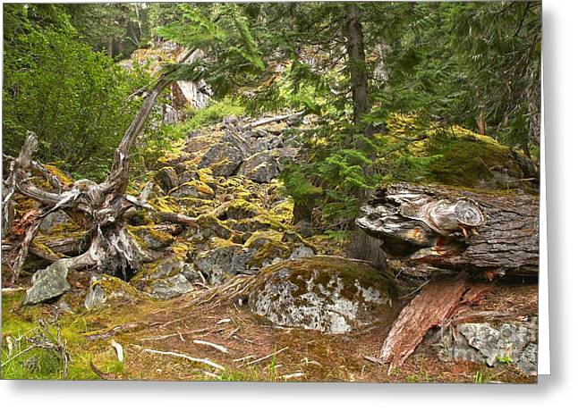 Tree Roots Photographs Greeting Cards - Rainforest Rock Slide Greeting Card by Adam Jewell