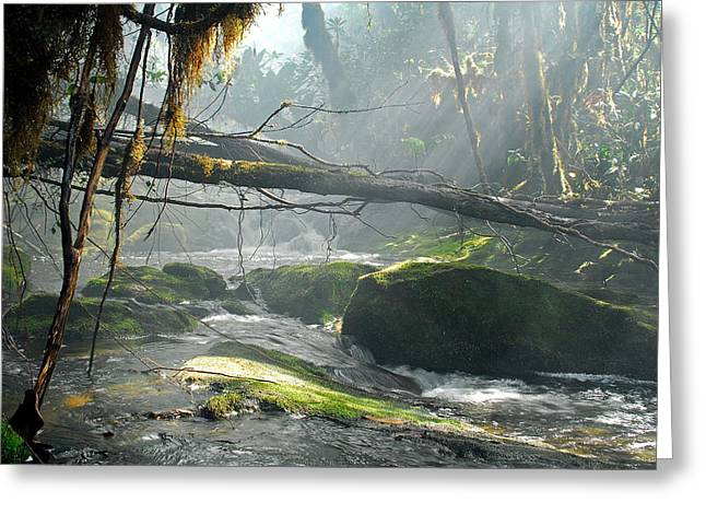 Stefan Carpenter Greeting Cards - Rainforest Stream Greeting Card by Stefan Carpenter