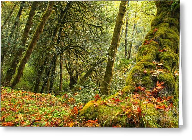 State Parks In Oregon Greeting Cards - Rainforest Trunk Greeting Card by Adam Jewell