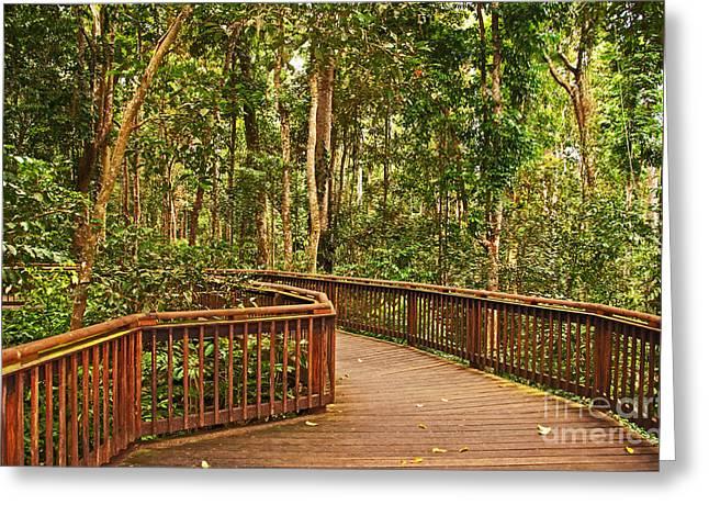 Rainforest Walkway Greeting Card by Bob and Nancy Kendrick