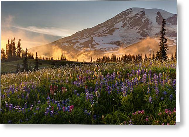 Mike Reid Greeting Cards - Rainier Golden Light Sunset Meadows Greeting Card by Mike Reid