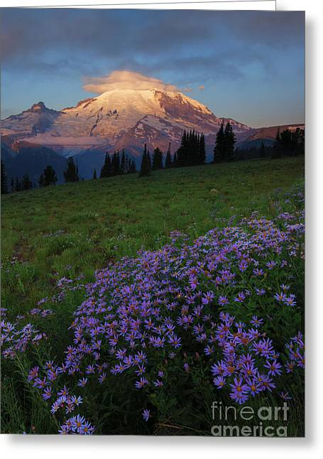 Aster Greeting Cards - Rainier Morning Cap Greeting Card by Mike  Dawson