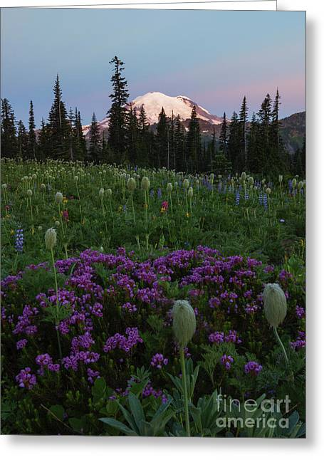 Anenome Greeting Cards - Rainier Pastel Dawn Greeting Card by Mike  Dawson