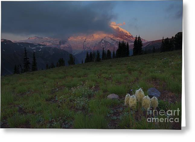 Anenome Greeting Cards - Rainier Revealed Greeting Card by Mike  Dawson