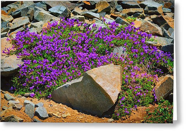 Rainier Wildflowers Greeting Card by Greg Norrell