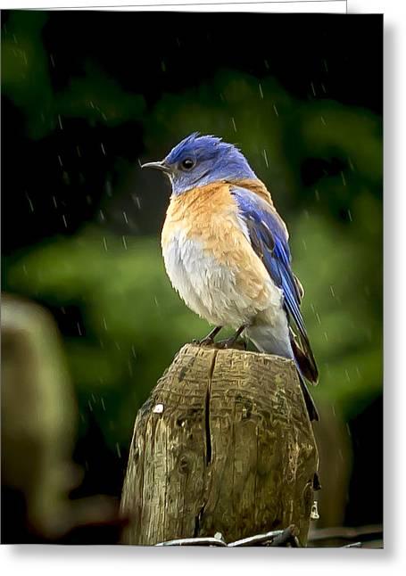 Raining Greeting Card by Jean Noren