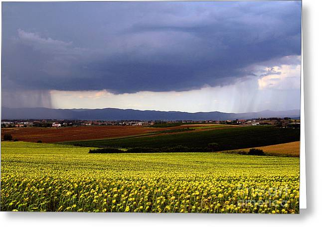 Field. Cloud Greeting Cards - Rainstorm In The Distance Greeting Card by Tim Holt