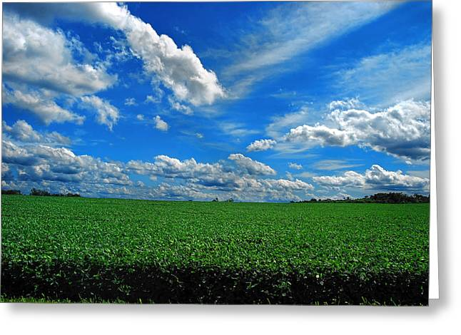 Indiana Farms Greeting Cards - Raintree County Summer  Greeting Card by Mark Orr