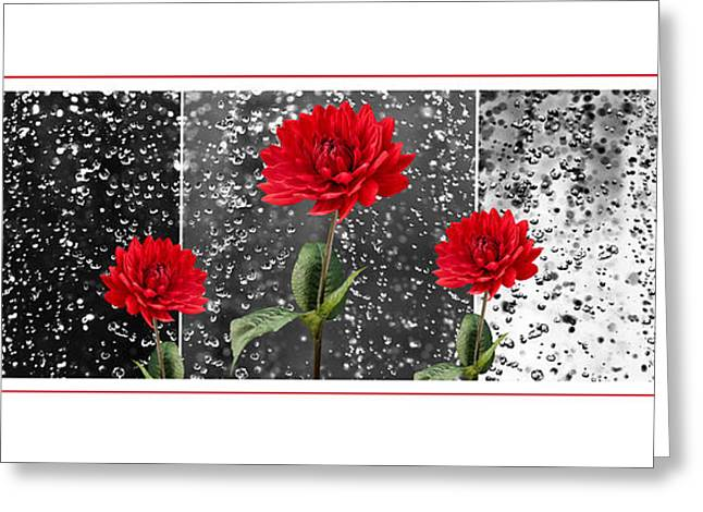 Front Room Digital Art Greeting Cards - Rainy Day Dahlias Greeting Card by Natalie Kinnear