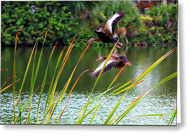 Overcast Day Greeting Cards - Rainy Day Fly By Greeting Card by Barbara Chichester